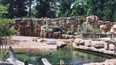 Flußpferde Anlage - Sambesi - Zoo Hannover, Deutschland