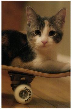 s-Cat-e