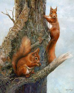 hilary mayes, british wildlife painting, red squirrel