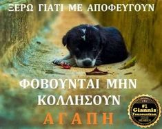Kindness To Animals, Greek Quotes, Common Sense, Dogs, Doggies, Dog