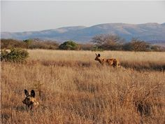 Mkhuze Game Reserve