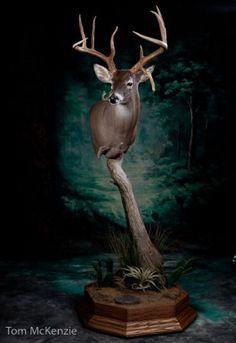 deer mount on pedestal | Whitetail Deer Pedestal Mount Pic #20