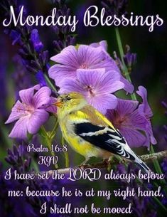 Best Monday Blessings And Quotes Good Morning Sister, Good Monday Morning, Cute Good Morning Quotes, Good Morning Prayer, Good Morning Images, Monday Blessings, Morning Blessings, Blessed Night, Have A Blessed Day