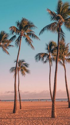 Fighetti - Never enough palm trees Ocean Wallpaper, Summer Wallpaper, Tree Wallpaper, Nature Wallpaper, Beach Aesthetic, Photo Wall Collage, Pretty Wallpapers, Jolie Photo, Aesthetic Pictures