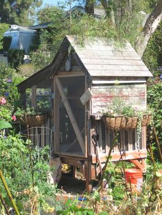 Chicken coop love!