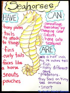The Creative Colorful Classroom: Informational Anchor Charts Ocean Habitat, Ocean Activities, Vocabulary Activities, Class Activities, Ocean Projects, Ocean Unit, Ocean Crafts, Ocean Themes, Classroom Themes