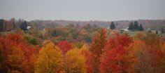 View out the back door. Gorgeous fall colors.