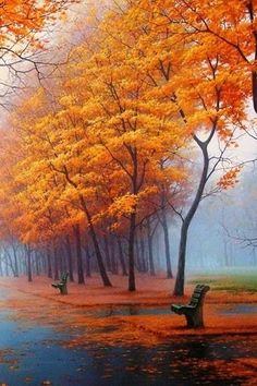 lonely bench, inviting path, beautiful color - soon, the mist will turn to snow