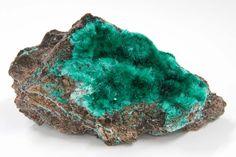 Needles of Brochantite. Kabolela, Congo -Mineral Hall- (Photo: Royal Belgian Institute of Natural Sciences, RBINS)