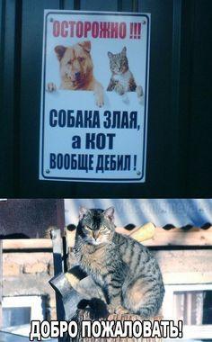 Смешные картинки для отличного настроения! Картика с текстом #демотиватор Апех Ягят Cat Memes, Funny Memes, Funny Cats, Funny Animals, Z Toon, Geek Meme, Anime Mems, Russian Humor, Cat Comics