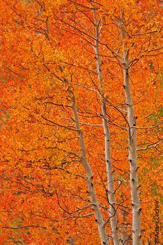 ~Fall in Colorado.