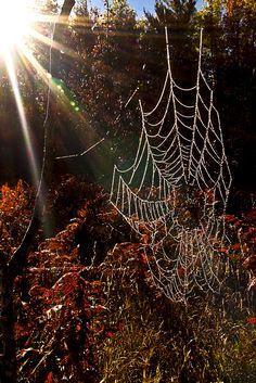 ภเгคк ค๓ Spider Art Webs Silk