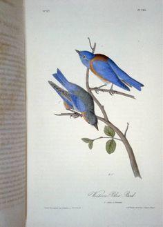 John James Audubon Birds of America 1871 Complete 8 Volumes from Panteek Antique Prints Audubon Birds, Birds Of America, Wild Creatures, John James Audubon, Bird Pictures, New York Public Library, Flower Images, Bird Prints, Floral Prints