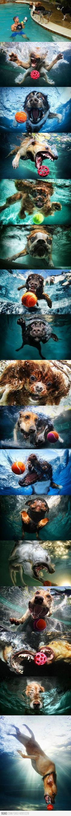 What a cool photo shoot of dogs jumping for the ball into the pool. Wow, so cool.
