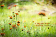Flower, Field, Wild Flower, Inspiration, Kindness - Original Photograph # 6603…