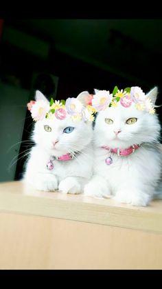 Springtime kitties