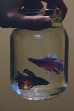 Evan elkezd halakat tartani. (?) (Amúgy ajaj, Declanosodik, ez nem jó, igyekszem, mindkettejüket kidolgozni lassan, és külön történetben tartani.) /// Egyre jobban tetszik az ötlet, hogy Declan tartson halakat. Ha kész a Kollázs, és nincsenek halak, ÁTRAKNI!