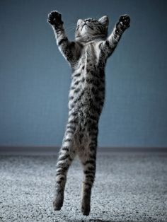 14 photos of cats in action: Stand tall