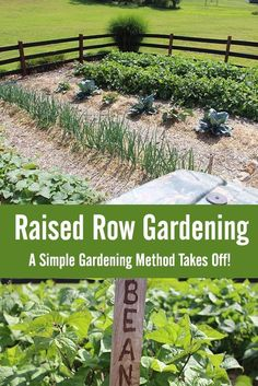Raised Row Gardening Grows – Why The Simple Growing Method Is Taking Center Stage! | Posted by: SurvivalofthePrepped.com