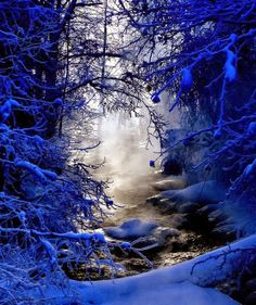 Beautiful Winter Cobalt Scene