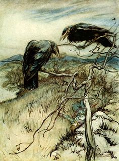 Rackham. Corvidae / Carrion / Hooded Crow / Raven. Crows are remarkably intelligent, kind birds who look after their elderly parents. They make a variety of calls (kowws / eh-aw) and can hear sound frequencies lower than humans. Have been known to imitate human voice. Amazing use of tools such as knives cut from stiff leaves. Eat toads - c.f Witches nest.