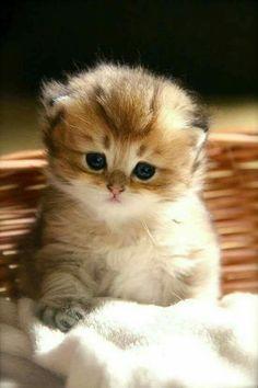 So cute... I love ❤️