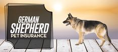 Do You Need German Shepherd Pet Insurance?