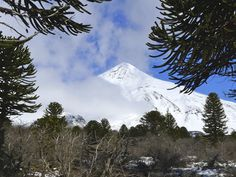 Volcano Lanin, surrounded by an Araucarias Forest on the boarder between Argentina and Chile. There is a bivak hut to spend the night on the way up to the top. Wonderful skitour possible to do in september, october, november. Ski Touring, Boarders, Volcano, Alps, Mount Rainier, Chile, Skiing, September, Tours