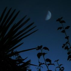my photograph ©an_ism // #moon #night #shadow #blue #silhouette