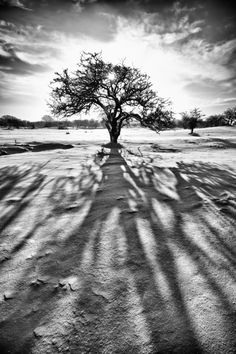 Sun - Tree - Shadow in the snow by Jan Teeuwen on 500px