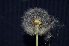 Dandi-Lyons  by naturelover on @creativemarket