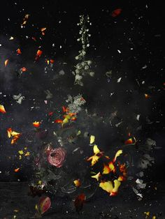 Here's what Ori Gersht does:  1) he creates still lives, like so many artists before him, then  2) he sets up a camera, like so many artists before him, then  3) blows them up, and finally  4) records the destruction on a high-speed camera