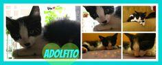 Adolfito hoy se llama Boris! Paula lo adoptó para que su otro gatuno, Toto, tenga un hermanito. Boris descansa en el sillón después de jugar todo el día con Toto... uff, qué vida de gato! Gracias Paula por adoptar a Boris !