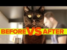 Before vs. After Getting A Cat