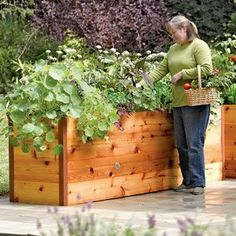 Elevated Cedar Raised Garden Beds, This would be fantastic. No bending whatsoever. Item # 8586748 $349.00