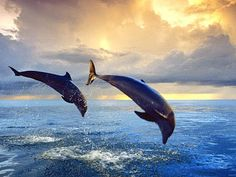 So Beautiful! I love dolphins!