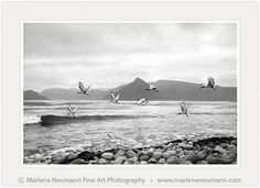 Marlene Neumann is a Master Photographer who intuitively captures the emotion in a landscape, beyond the camera.Her Black and White photographs are timeless Fine Art Photography, Landscape Photography, Creatures, African, In This Moment, Black And White, Nature, Photographs, Outdoor