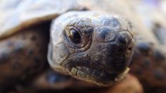 Turtles, Filter, Outdoor, Self, Vacation Pictures, Camera, Outdoors, Turtle, Outdoor Games