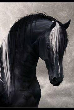 Black horse, white mane streak. I love it's mane❤️