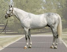 Unbridled's Song I cant believe this beautiful boy is gone♥ RIP