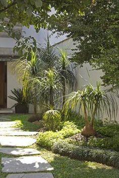 Bambuzinho de jardim bambusa textilis gracilis china for Proyecto de jardineria