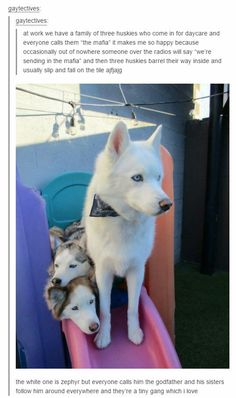 Dogs funny puppies kittens New ideas Funny Animal Memes, Cute Funny Animals, Cute Baby Animals, Funny Cute, Funny Dogs, Animals And Pets, Hilarious, Funny Husky, Animal Humor