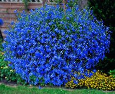 5 piante perfette per un terrazzo al sole | Pinterest | Gardens ...