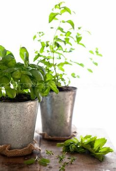 Indoor Herb Garden 101 - I can get some sweet containers for what I'll save on buying fresh herbs! :-)
