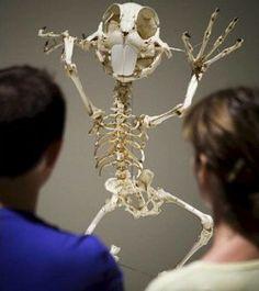 Michael Sporn Animation – Splog » Skeleton show