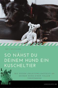 Mit dieser DIY-Anleitung bastelst du ganz leicht einen Teddybären für deinen Hund. Alles was du dazu brauchst, ist ein alter Handschuh.    #LokisLifeBlog #DIY #Upcycling #Hundespielzeug #Hundeblog Diy Upcycling, Alter, Tricks, Dogs, Movie Posters, Movies, Community, Animals, Animals Dog