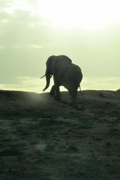 Addo Elephant Park - South Africa Elephant Park, South Africa, Travel, Animals, Viajes, Animales, Animaux, Trips, Animal Memes