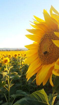 Wanderful Retreats - Wanderful Home Heaven On Earth, Small Groups, Tuscany, Travel Inspiration, Past, Italy, Adventure, Sunflowers, Creative