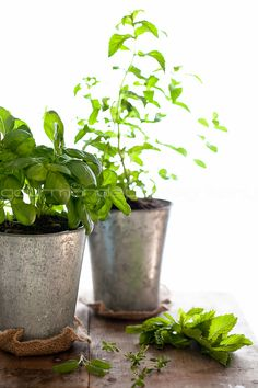 How to Grow your Own Indoor Culinary Herb Garden.