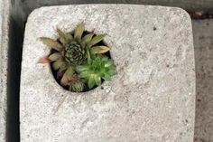 Weekend Project: Concrete Garden Planters & Stepping Stones - just like making a stepping stone, but with 'holes' for plants